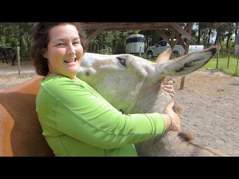 Xxx Mp4 Donkey Wants Love 3gp Sex