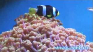 www.reef.ro