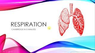 IGCSE BIOLOGY REVISION - [Syllabus 12] Respiration