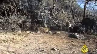 النمر العربي - عمان