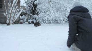 MauzzzTV 01 - Cute kitty discovers snow, climbs tree and gets in trouble - VERY FUNNY CAT