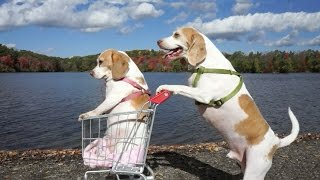 Dogs' Epic Shopping Cart Voyage: Funny Dogs Maymo & Penny