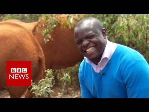 Xxx Mp4 Elephant Interrupts BBC Reporter In Mid Flow BBC News 3gp Sex