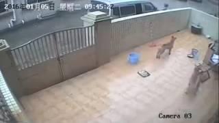 Dog 🐕 thief kutta 🐩 chor video by muddasir ahamed