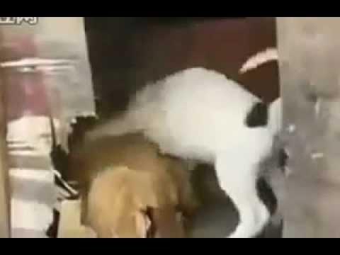 Xxx Mp4 El Perro Y El Pollo Dog Sex 3gp Sex