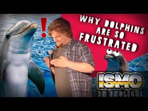 ISMO | Why Dolphins Are So Frustrated