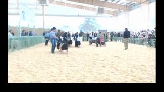 Western Bonanza Swine Show Live Stream