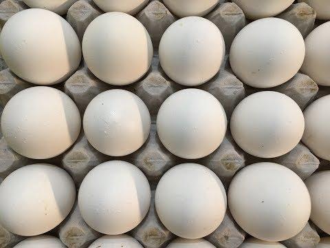 Xxx Mp4 दिल्ली मुर्गा मंडी के भाव Murga Mandi Rates Egg Rates Today S Poultry Rate 19 6 2017 3gp Sex