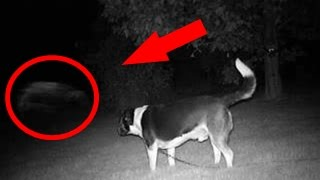 5 Real Ghosts Caught by Dogs | Top 5 Ghost Videos