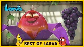 LARVA | BEST OF LARVA | Funny Cartoons for Kids | Cartoons For Children | LARVA 2017 WEEK 19
