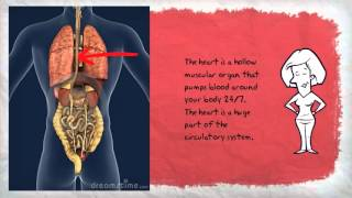 Names and Functions of Organs