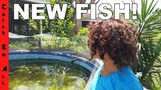 NEW FISH in THE POND AQUARIUM! Help us NAME Them!