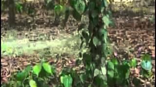 Banglar Krishi 06 (Sojina+Chui Jhal) telecasted on 15 05 2014
