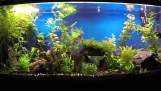 Fish Tank 12 20 13