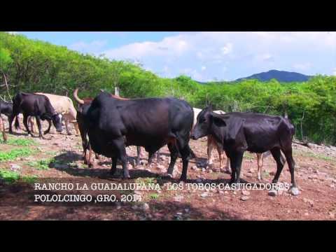 LA CASA DE LOS CASTIGADORES R LA GUADALUPANA DE POLOLCINGO GRO