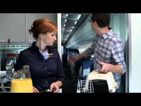 Flight Attendant Director