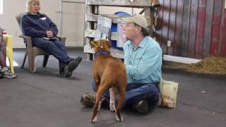 Gary Wilkes Bonking Video, Dog Training, Solid K9 Training