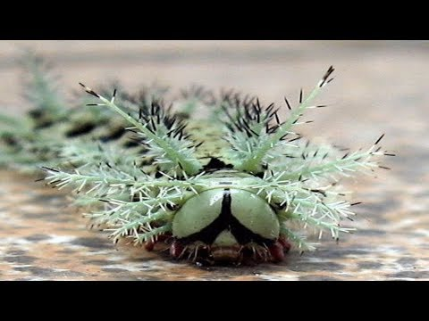 8 Tiny Animals That Can Destroy