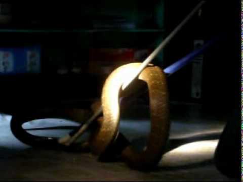 Tangkap ular tedung cobra dlm rumah