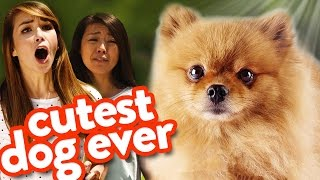 Dogs Don't Get Girls! ft. SUPEReeeGO