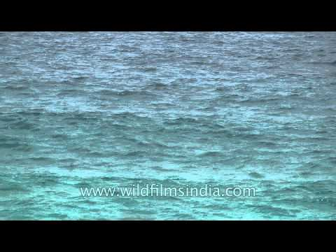 Azure sea seen from a tropical islands: Andamans