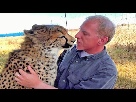 Man Reunites With African Cheetah BIG Cat After 1 Year Absence Do You Remember Me A Documentary