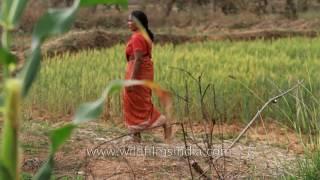 Gond woman wears sri and walks in her fields, Madhya Pradesh