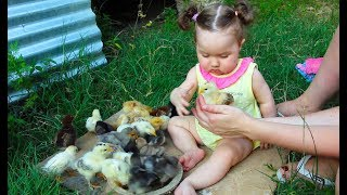 Cute Baby Meeting Chicks for the first time