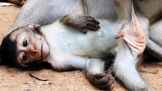What Baby Monkey Doing? - Cute Baby Monkey Look Amazing