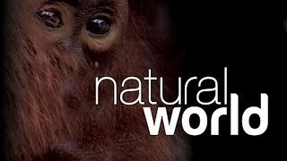 Natural World S24 E03 Queen Of Trees