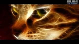 Abu Huraira - Der Vater der Katze ᴴᴰ┇ Sahaba Serie