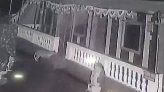 Leopard vs pitbull. Leopard killed pittbull straight in a house