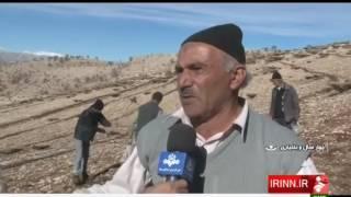 Iran Persian Medicinal plants cultivation, Naqan Dopolan village روستاي ناغان دلفان ايران
