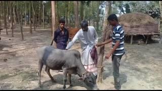 Denapawna(দেনাপাওনা) Bangla New HD Natok 2017