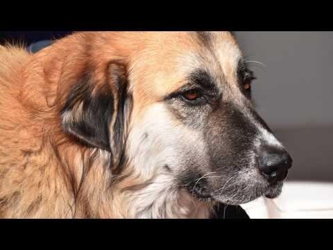 Sophia s Journey Bastrop Animal Rescue