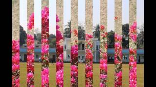 Daud Public School and College, Jessore