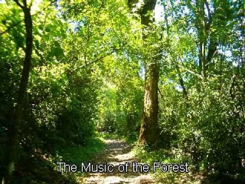 Música del Bosque Relajación y meditación