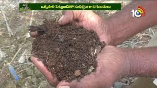 Palm Oil Farming | Matti Manishi | 10TV News