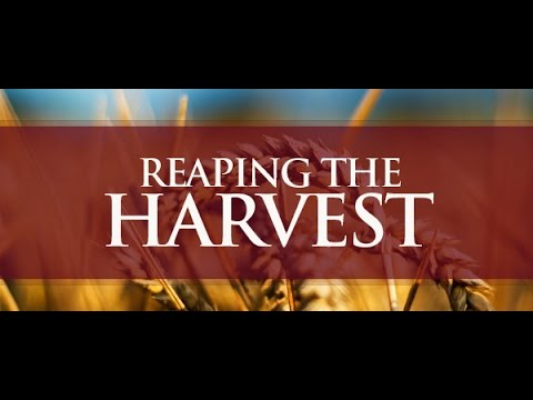 Message: How To Reap Your Harvest - Part 1 (Amos B Robinson)