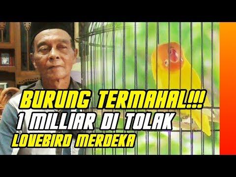 EXPOSABLE BIRDS: OFFERING 1 BILLION DOES NOT MAKE THE LOVEBIRD MERDEKA ON SALE