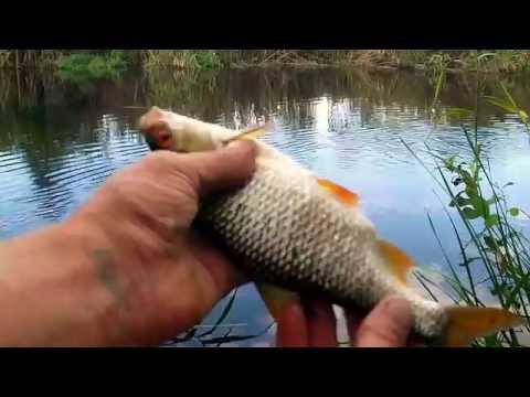 фантастическая рыбалка сазан