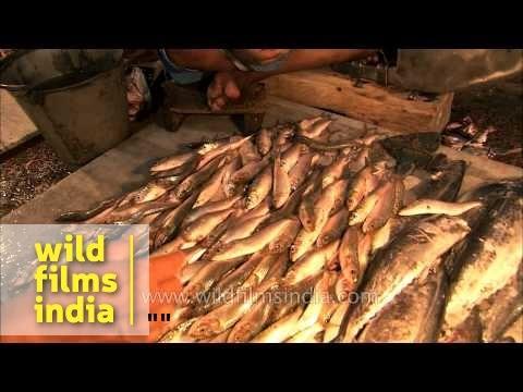 Live fishes, prawns and eels for sale - Kolkata fish market