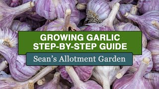 How to plant #garlic (Complete Step-by-Step Guide) [Sean