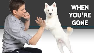 How to Train Your Dog While You