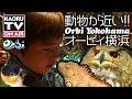 動物が近くてかわいい!オービィ横浜😄🎉 @ Orbi Yokohama Animals & Wildlife Theme Park by SEGA. with English subtitle