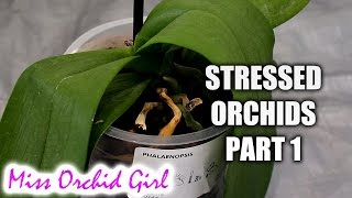 Rejuvenating stressed Orchids Part 1 - Limp, leathery leaves