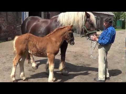 Konie Świat Zwierząt Witoldzin 17