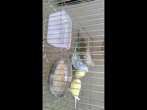 Xxx Mp4 My Life Bird Video 3gp Sex