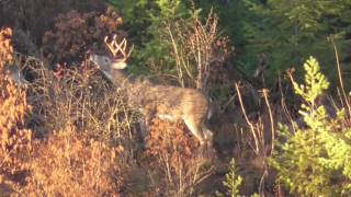 Testing The Zoom On My Video Camera For Long Range Hunting