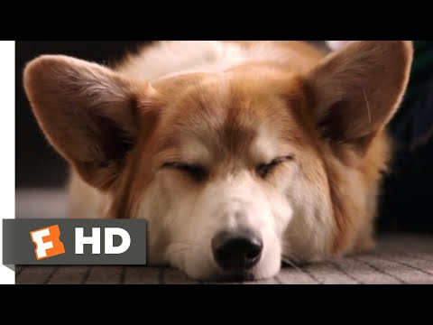 A Dog's Purpose (2017) - My Best Life Scene (7/10) | Movieclips